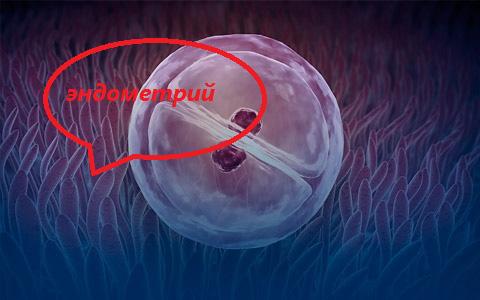 Беременность на фоне хронического эндометрита